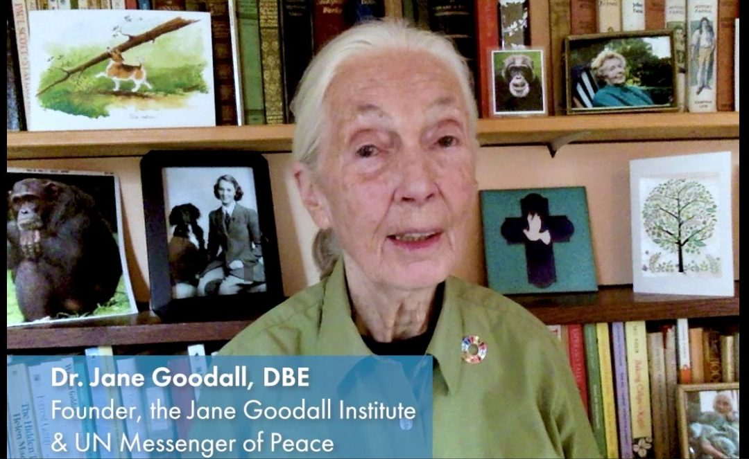 Message du Dr Jane Goodall pour la Journée internationale de la Paix 2020