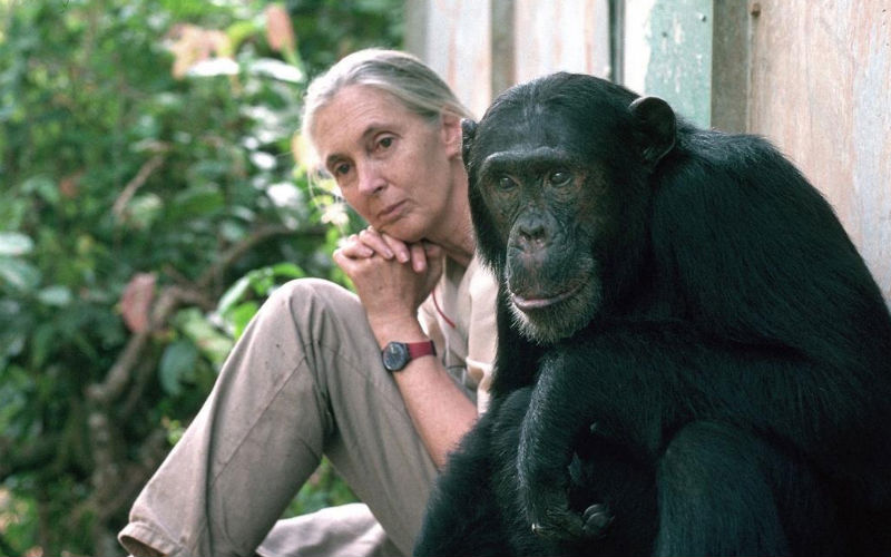 Jane Goodall: ma vie en dates